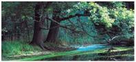 Oderwald